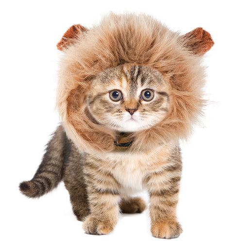 https://zone-chat.fr/products/deguisement-de-lion-pour-chat