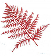 RED DISPLAY FERNS(12)