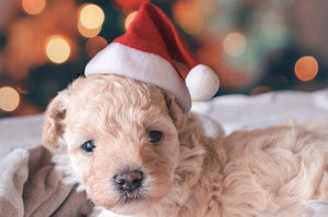 1pc Christmas Pet Hat