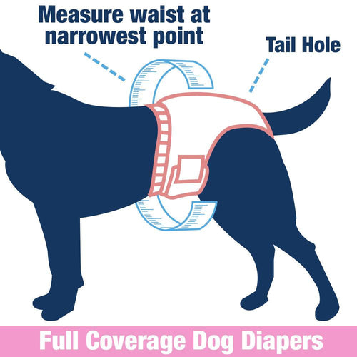 ValueFresh Disposable Diapers for Female Dogs, Medium, 576 Count