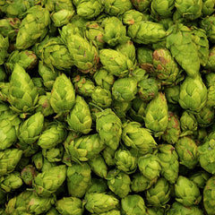 Fresh Picked Hops