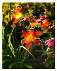 Day Lily diptych