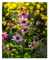 Purple Cone Flowers Diptych
