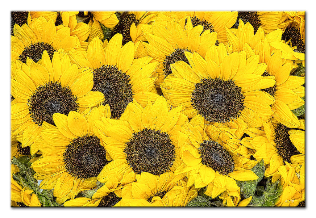 Farmers Market Sunflowers