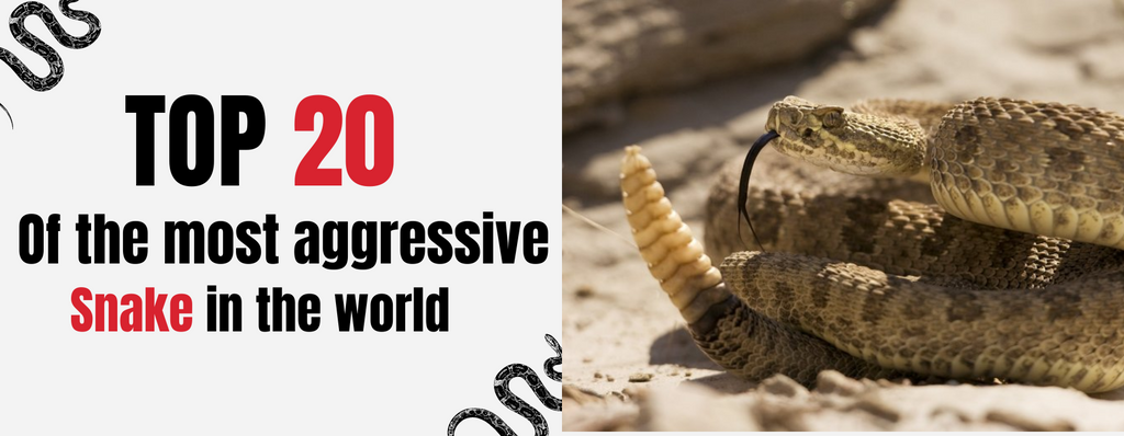 TOP 20 Most Aggressive Snakes in the World