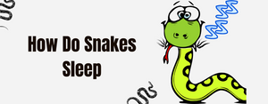 Do You Know How Do Snakes Sleep