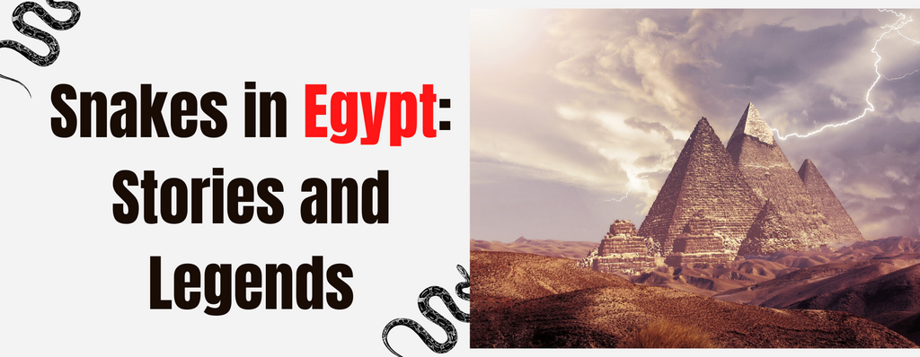 Snakes in Egypt: Stories and Legends