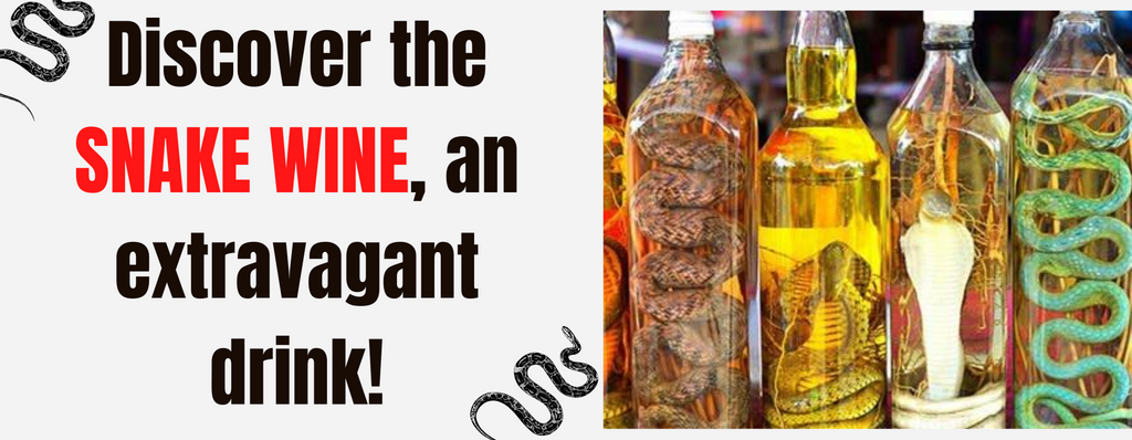 Discover the snake wine, an extravagant drink!