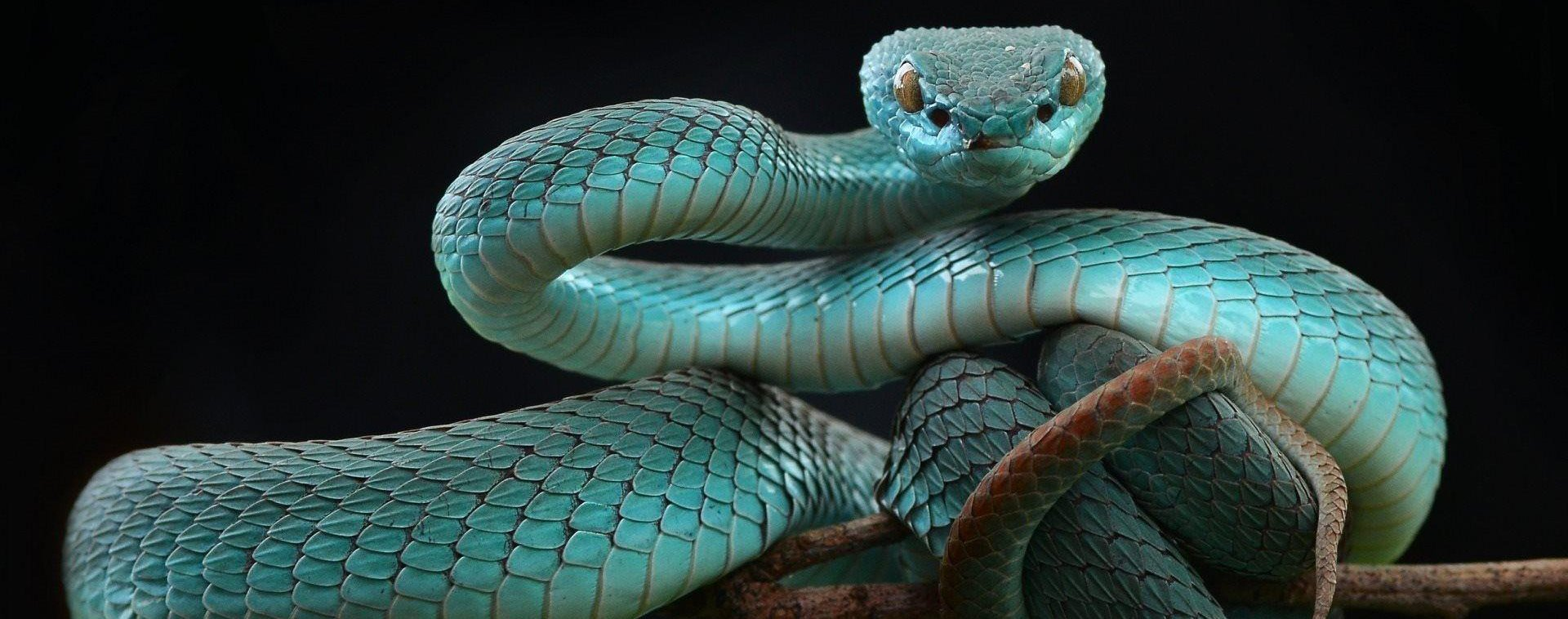Blue Snake Dreams in Islam