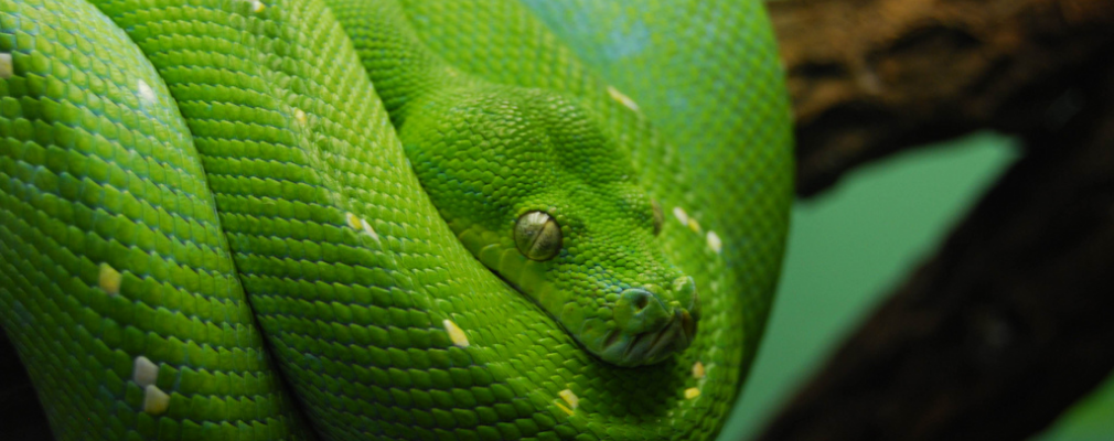 green snake dream