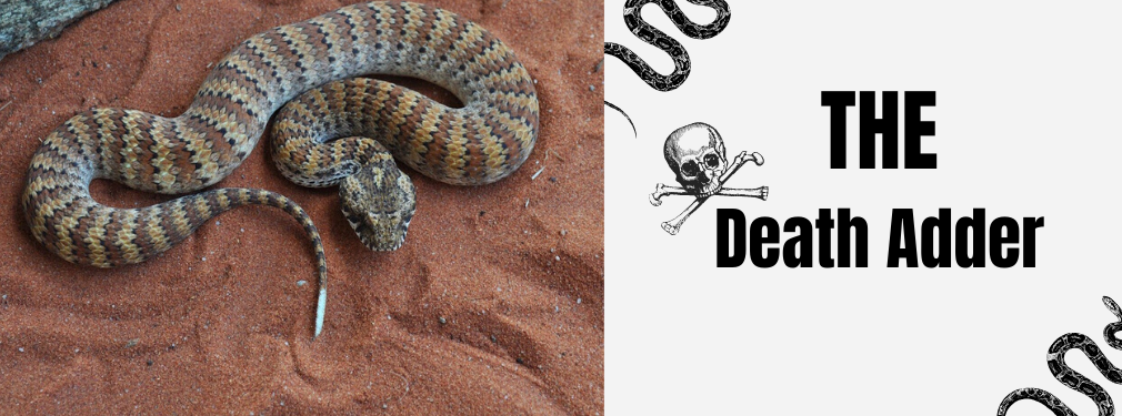 the death adder snake