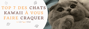 TOP 7 des chats kawaii !
