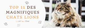 TOP 11 des chats lions