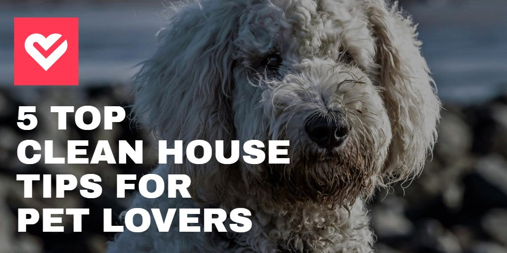 5 TOP CLEAN HOUSE TIPS for PET LOVERS in 2020 - dog