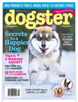 BLUE ZOCA WINS DOGSTER MAGAZINE'S 2021 EDITORS' CHOICE AWARD!!