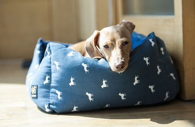 HOW TO KEEP YOUR DOG'S BED CLEAN AND FRESH