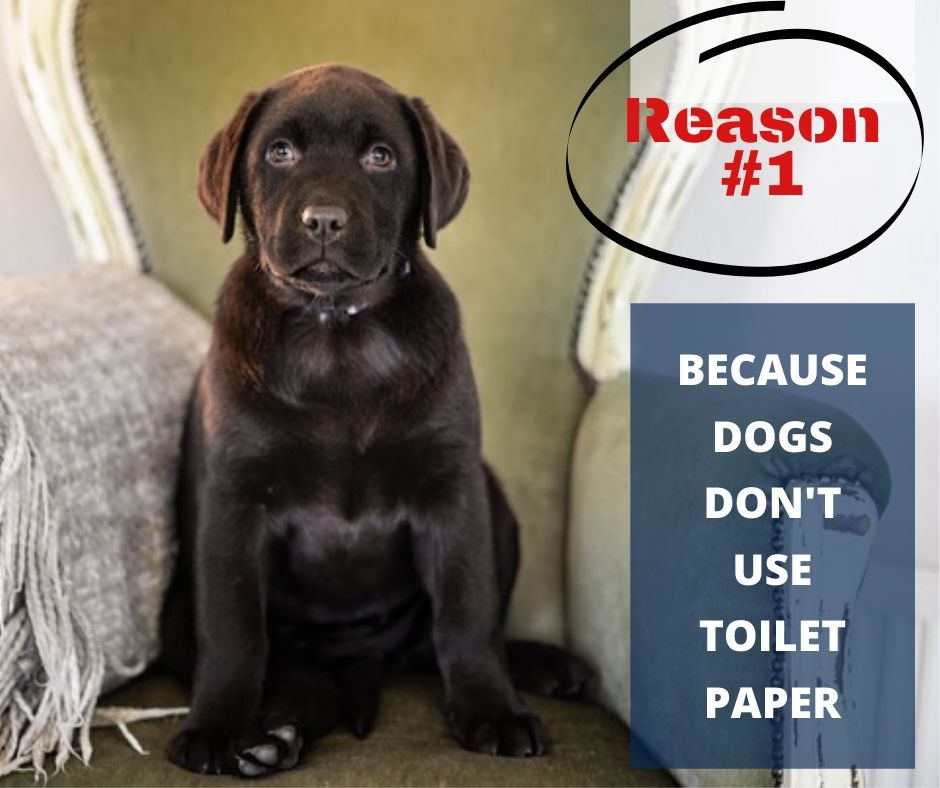 TOP 10 REASONS YOU NEED A WATERPROOF BLANKET - REASON #1 - BECAUSE DOGS DON'T USE TOILET PAPER