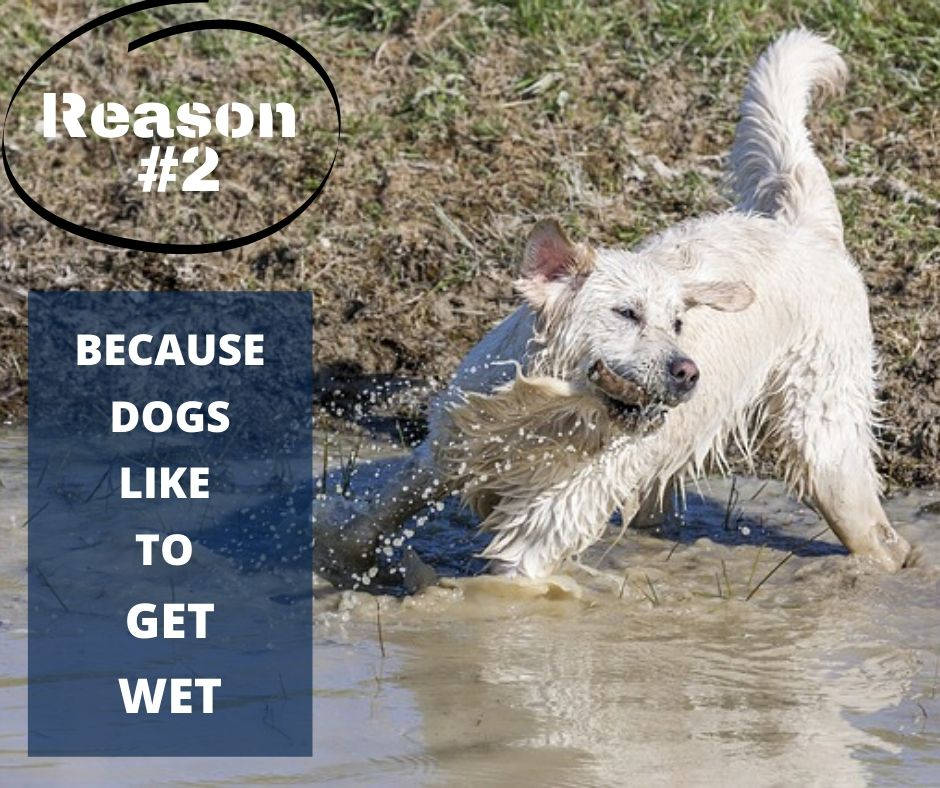 TOP 10 REASONS YOU NEED A WATERPROOF BLANKET - REASON #2 - BECAUSE DOGS LIKE TO GET WET