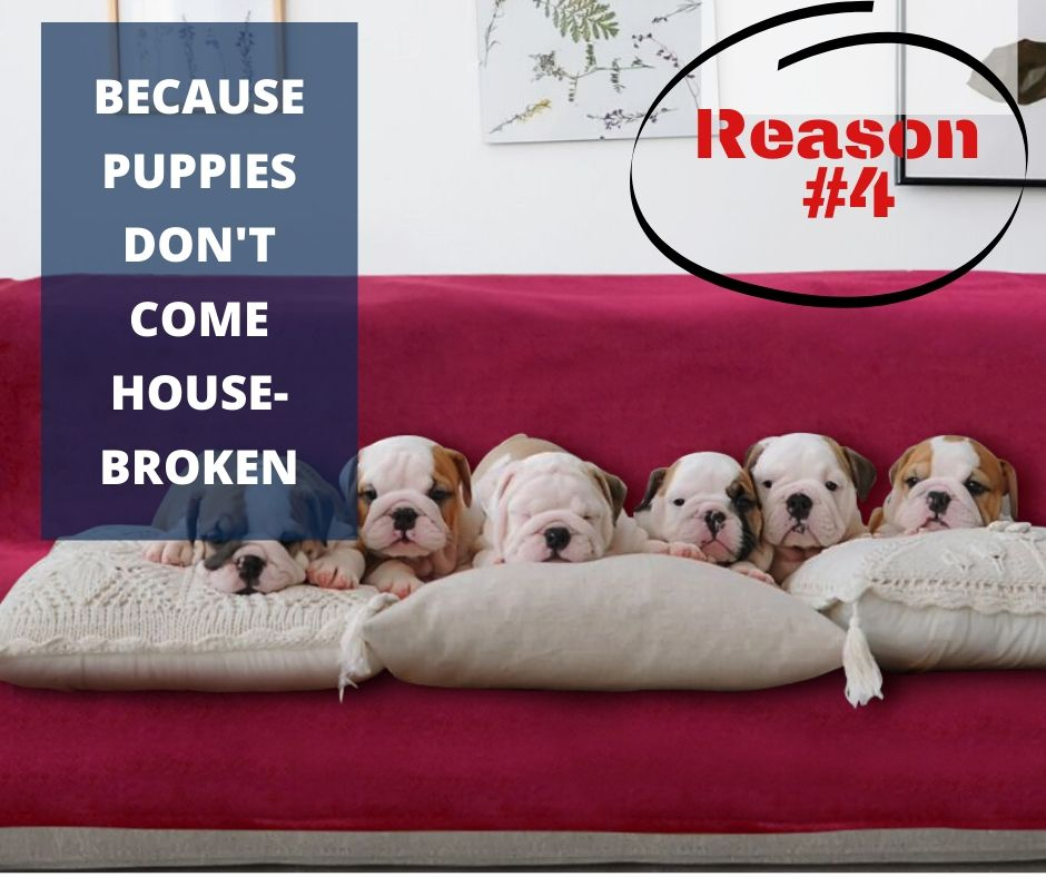 TOP 10 REASONS YOU NEED A WATERPROOF BLANKET - REASON #4 - BECAUSE PUPPIES DON'T COME HOUSEBROKEN