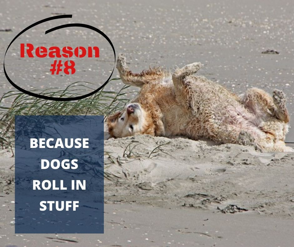 TOP 10 REASONS YOU NEED A WATERPROOF BLANKET - REASON #8 - BECAUSE DOGS ROLL IN STUFF
