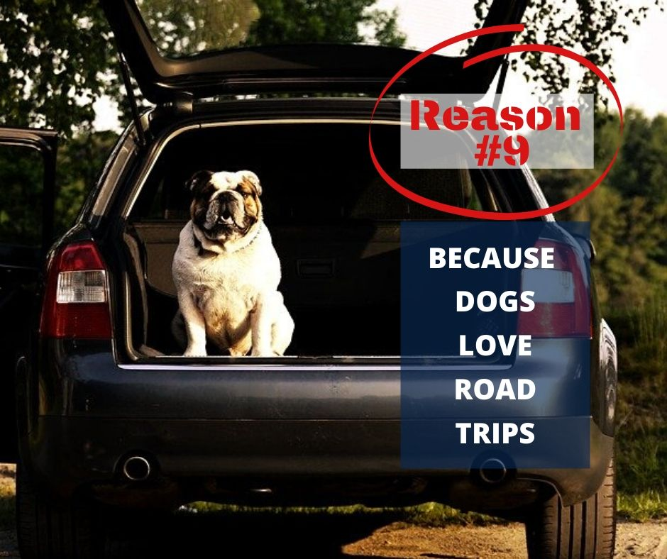 TOP 10 REASONS YOU NEED A WATERPROOF BLANKET - REASON #9 - BECAUSE DOGS LOVE ROAD TRIPS