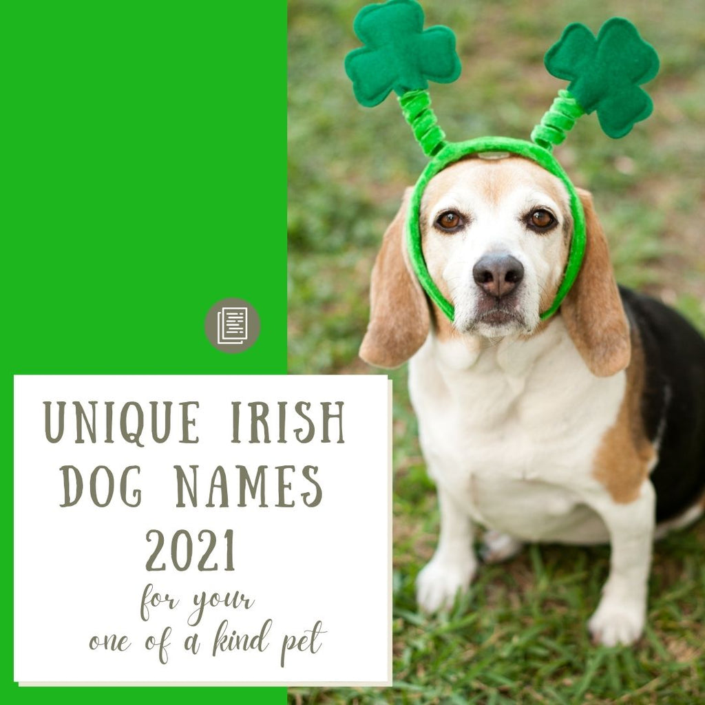 UNIQUE IRISH DOG NAMES FOR 2021 -- FOR YOUR ONE OF A KIND PET