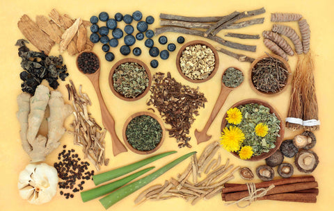 A collection of adaptogenic herbs and roots artfully displayed