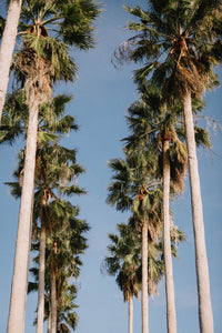 Clearwater Palms II