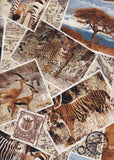 PCC 150 African Animal Post Cards Craft Fabric