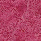 CAR 252 Flower Burst Mum Mid Pink
