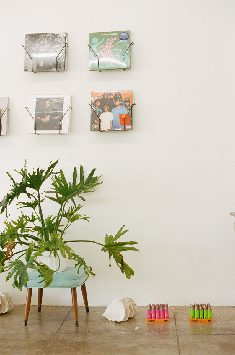 Floor plant with records for sale above