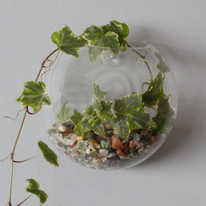 All Glass Terrarium - Small Hanging Wall Bowl-Decor-The Modern Home Shop