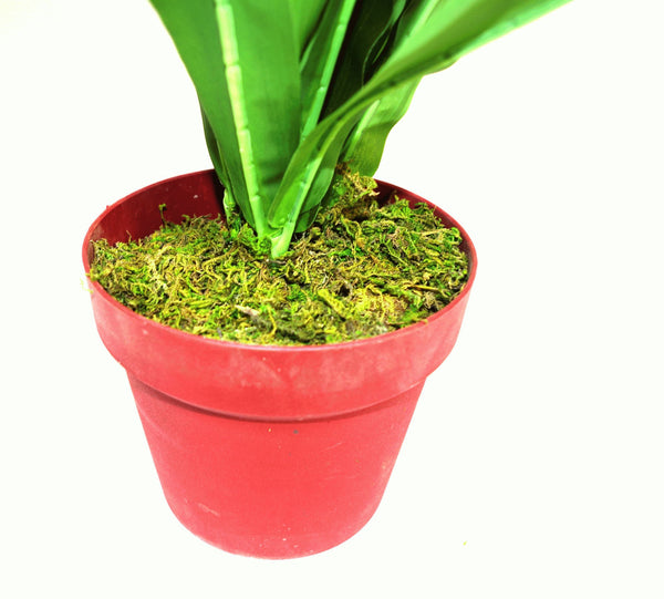 Artificial Medium 55cm Drancaena-Artificial Plant-The Modern Home Shop