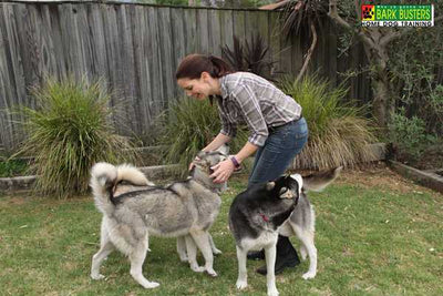 What is Holistic Dog Training?