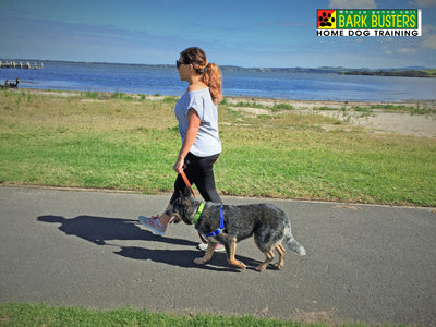 Walking the Dog: Training Tips