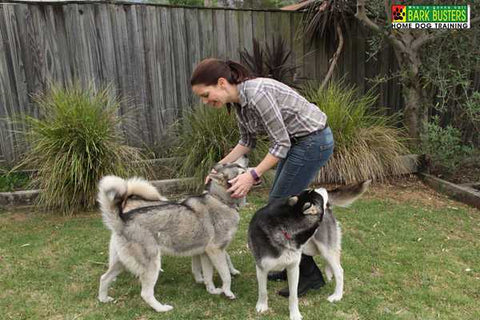 holistic-dog-training-globaldogcompany-au
