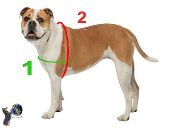 waggwalker-girth-measurements-globaldogcompany