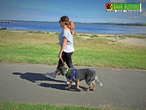 walkingdogproperly-globaldogcompany-au