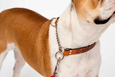 "Bark Busters Leather ""Communication' Training Collar. One of the best training collars on the market."