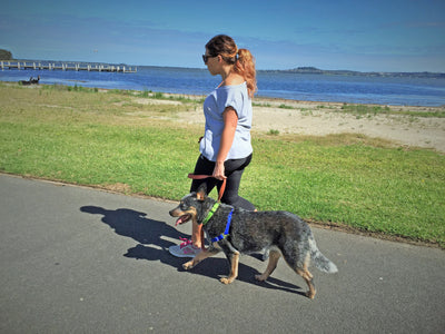 "WaggWalker® Dog Walking ""Communication"" Harness."
