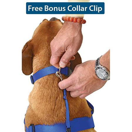 waggwalker-collar-clip-global-dog-company-au