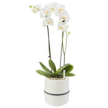 AIRY S System mit Orchidee