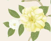Sanderson Christabel Yellow/Ivory 213377 Wallpaper