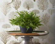 Cole & Son Seafern 107/2011 Wallpaper