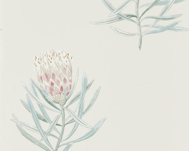 Sanderson Protea Flower Porcelain/Blush 216330 Wallpaper