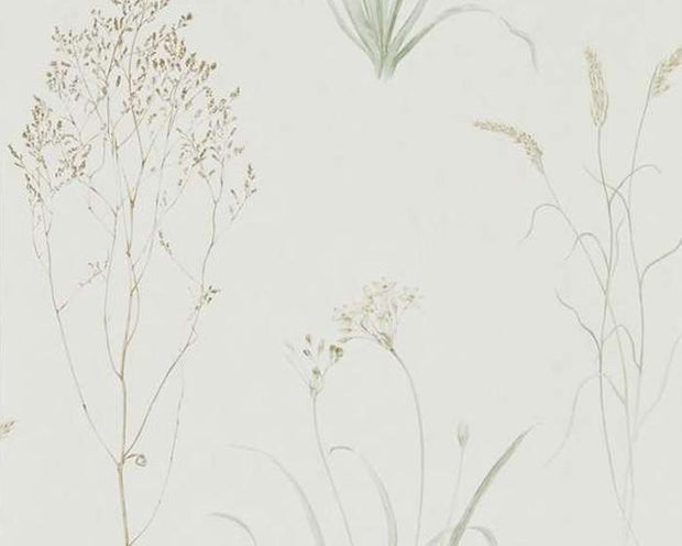 Sanderson Farne Grasses Willow/Pebble 216488 Wallpaper