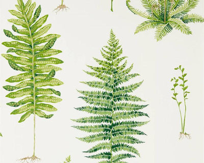 Sanderson Fernery Botanical Green 216633 Wallpaper