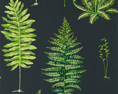 Sanderson Fernery Botanical Green/Charcoal 216634 Wallpaper