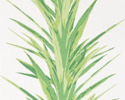 Sanderson Yucca Botanical Green 216649 Wallpaper