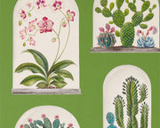 Sanderson Terrariums Botanical Green/Multi 216656 Wallpaper